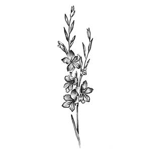 Gladiolus, Hardy