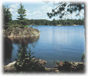 Wall Mural; Lake In The Woods