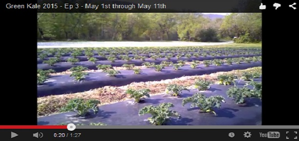 Video Series: Click to watch our Green Kale Grow