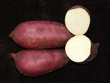 Sweet Potato Slips - OG Murasaki