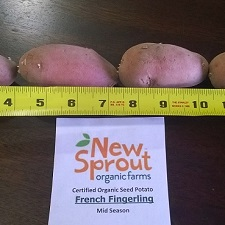 Organic French Fingerling