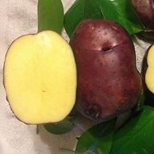 Organic Huckleberry Gold