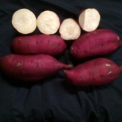 Sweet Potato Slips - Murasaki