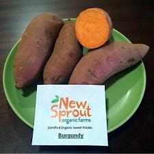 Sweet Potato Slips - OG Burgundy