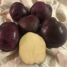 Organic Purple Beauty