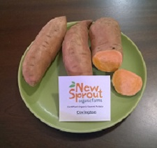 Sweet Potato Slips - OG Covington