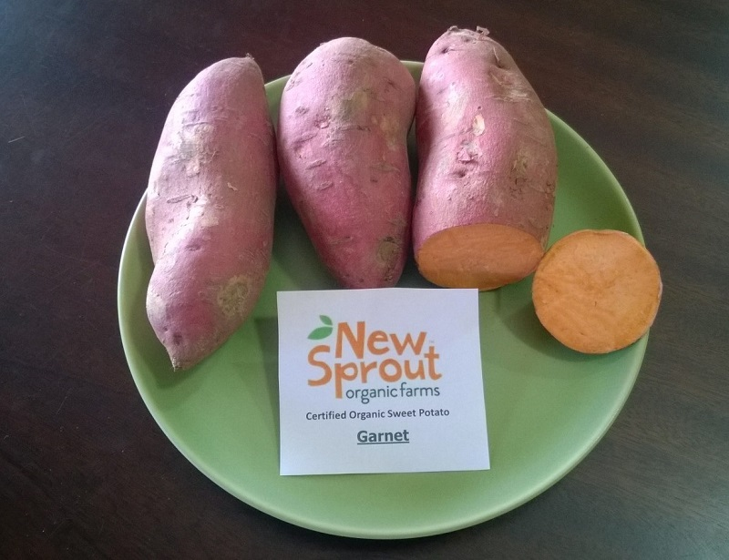 Sweet Potato Slips - OG Garnet