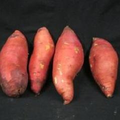 Sweet Potato Slips - Beauregard