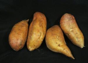 Sweet Potato Slips - Evangeline