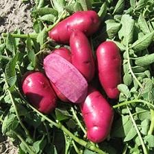 Organic Terra Rosa