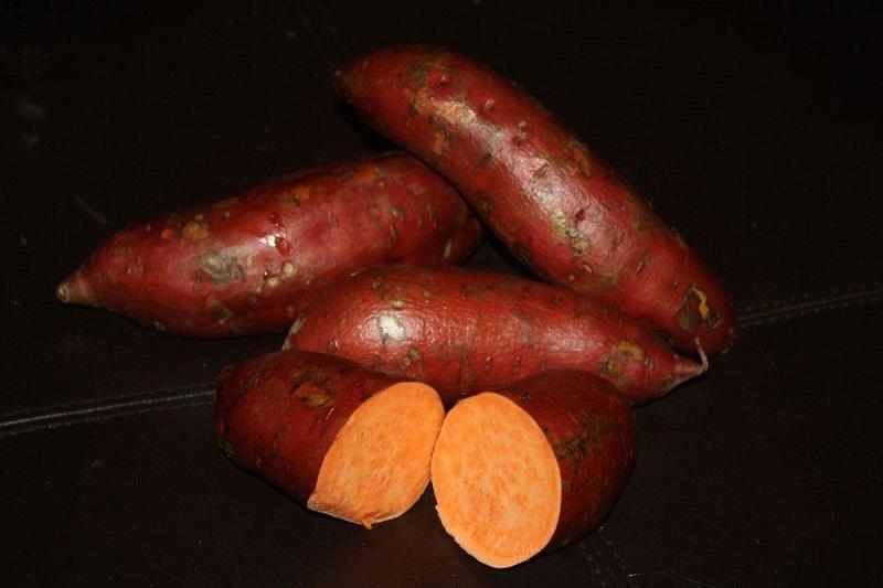 Sweet Potato Slips - Garnet