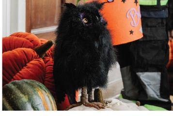 Hootie & Priscilla Owls