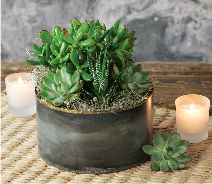 Bringing Zen Home: Olive & Cocoa
