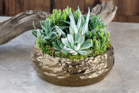 Gilded Succulent Potager
