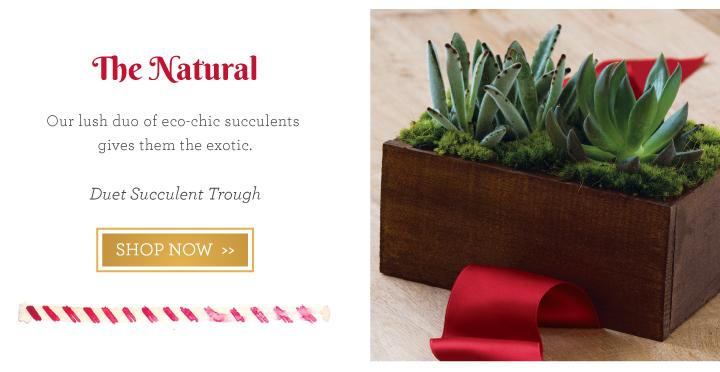 Duet Succulent Trough