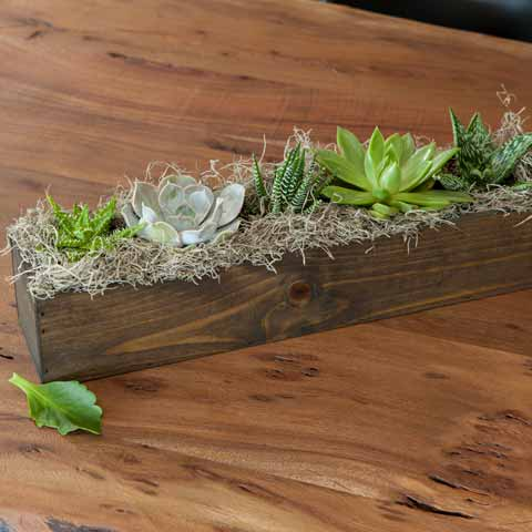 Giselle Succulent Trough
