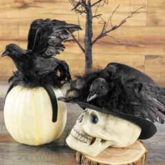 Raven Top Hat & Crow Headband