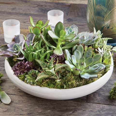 White Modern Succulent