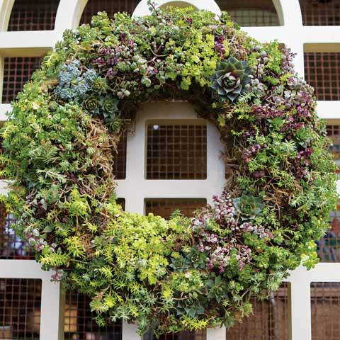 Lush Succulent Wreath