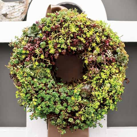 Petite Succulent Wreath