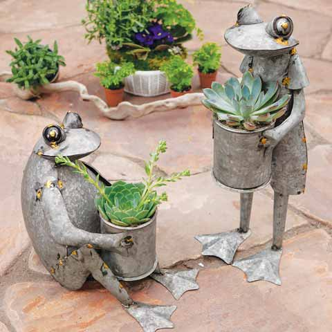 Theo & Skip Frog Succulents