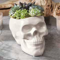 Skull Succulent