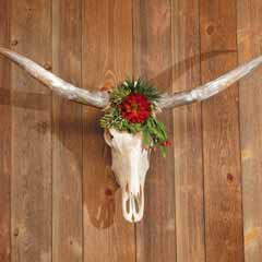 Majestic Longhorn Skull