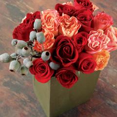 Sicilian Rose
