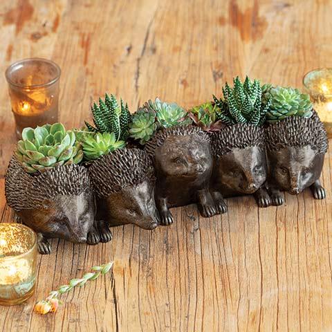 Hedgehog Hoedown Succulent