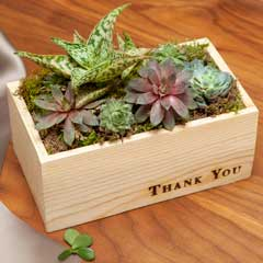 """Thank You""  Succulent"