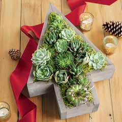 Tree-shaped Succulent Trough