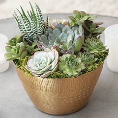 Patterned Gilt Succulent