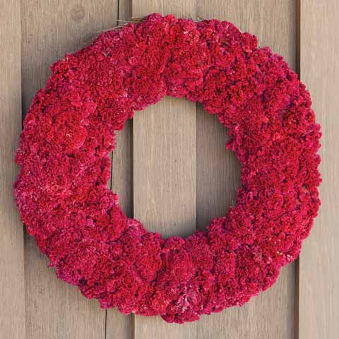 Crimson Preserved Wreath