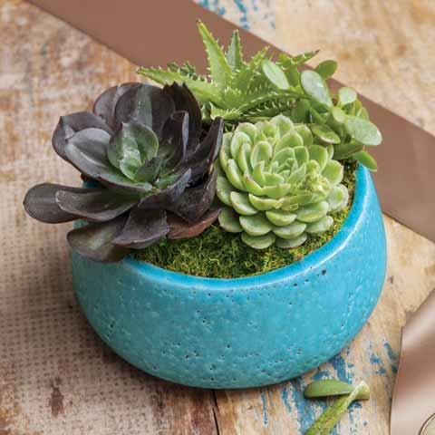 Aged Turquoise Succulent