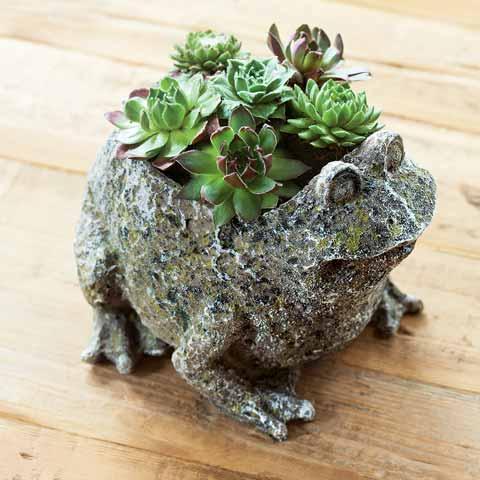 Succulent Frog