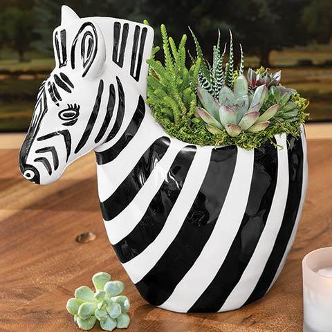 Zebra Succulent Planter