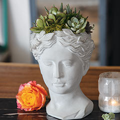 Goddess Succulent