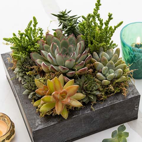 Urban Oasis Succulent