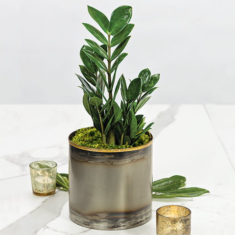 Zoey Potted Plant