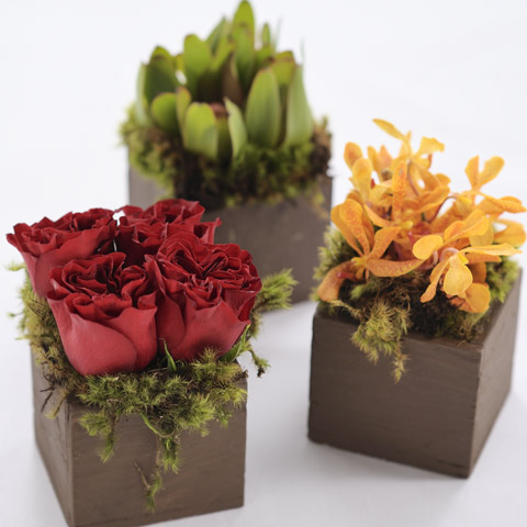 Trio Of Origami Blooms All Gifts Olive Cocoa