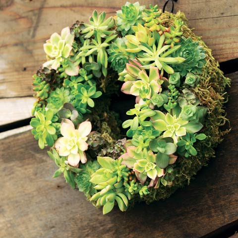 Spring Green Succulent Wreath