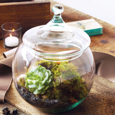 Succulent Terrarium Kit All Gifts Olive Cocoa