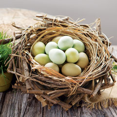 Spring Nest & Wood Eggs