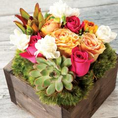 Succulent & Fleur