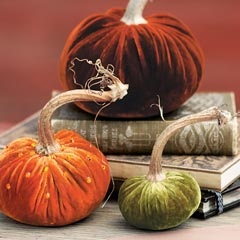Velveted Pumpkin Trio