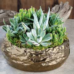 Gilded Succulent Potager