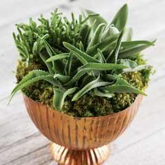 Bronzed Succulent Planter