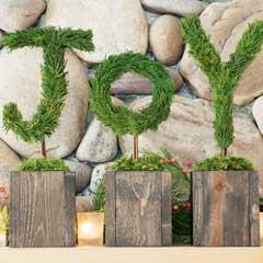 Joy Topiary Trio
