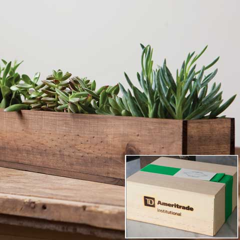 TD Ameritrade Institutional Giselle Succulent Trough
