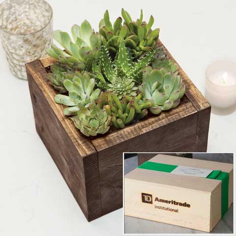 TD Ameritrade Institutional Cocoa Succulent Box